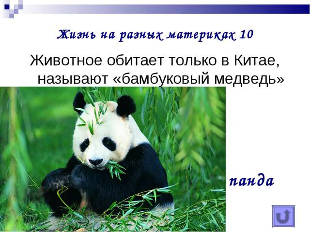 Жизнь на разных материках 10 Животное обитает только в Китае, называют «бамбу...