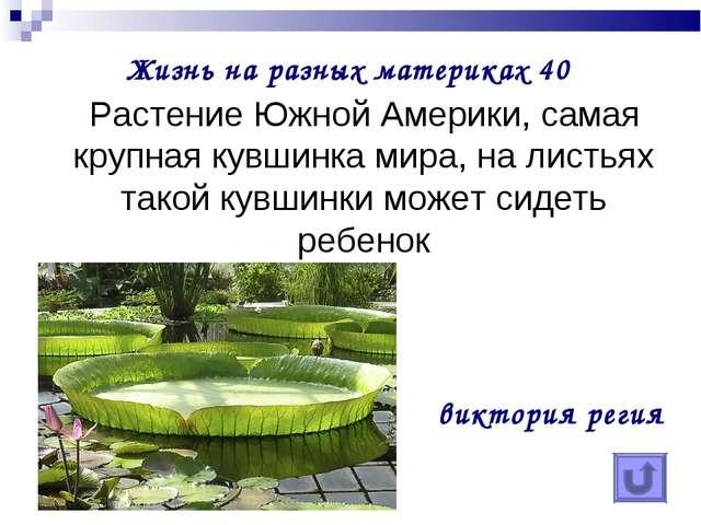 Жизнь на разных материках 40 Растение Южной Америки, самая крупная кувшинка м...