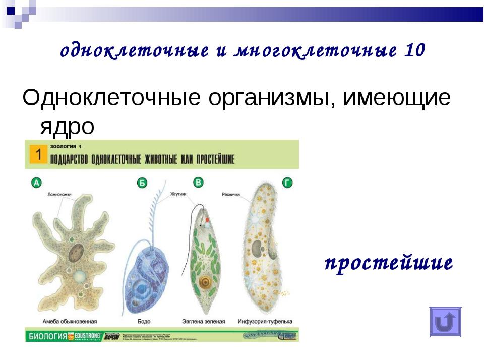 одноклеточные и многоклеточные 10 Одноклеточные организмы, имеющие ядро прос...