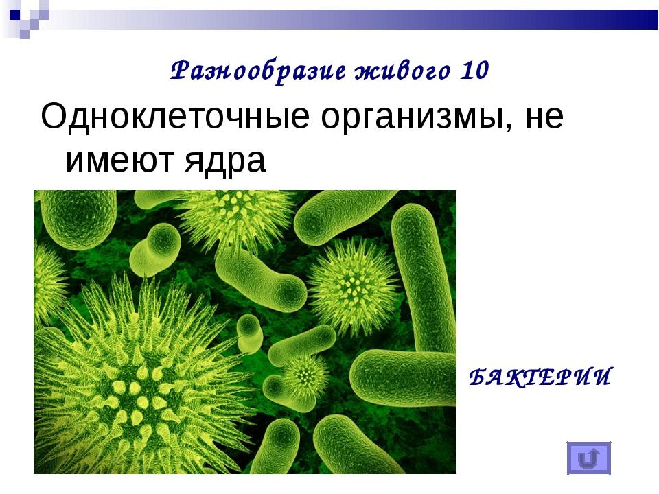 Разнообразие живого 10 Одноклеточные организмы, не имеют ядра БАКТЕРИИ