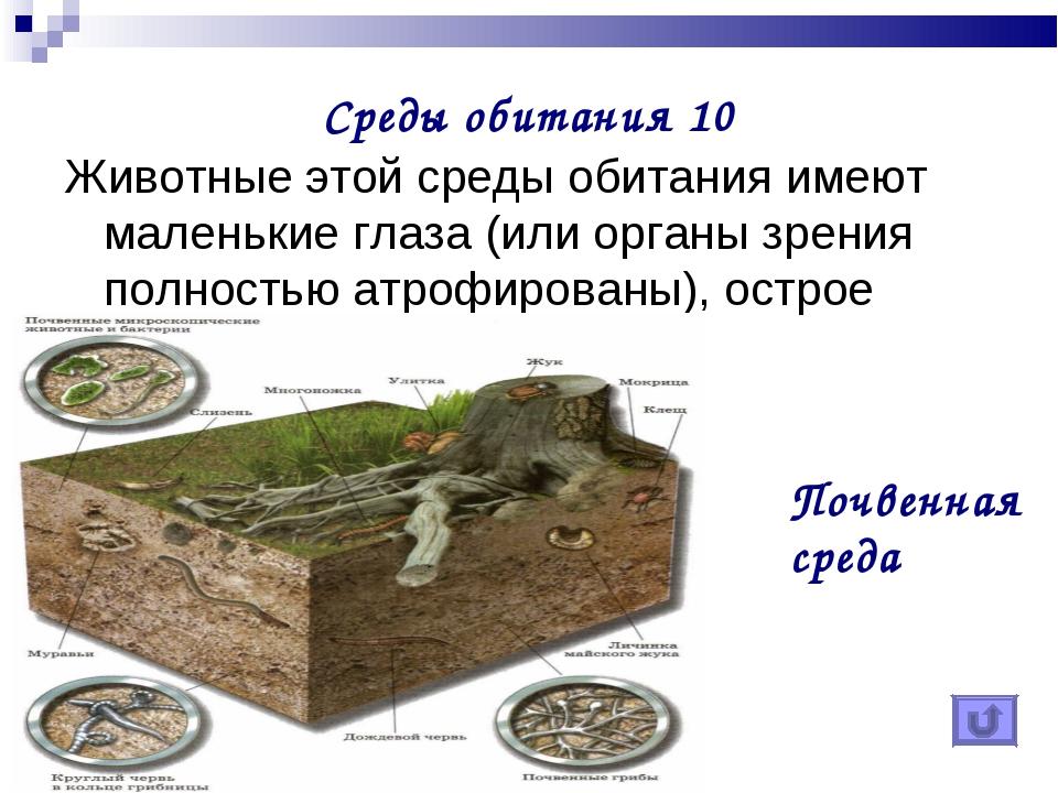 Среды обитания 10 Животные этой среды обитания имеют маленькие глаза (или орг...