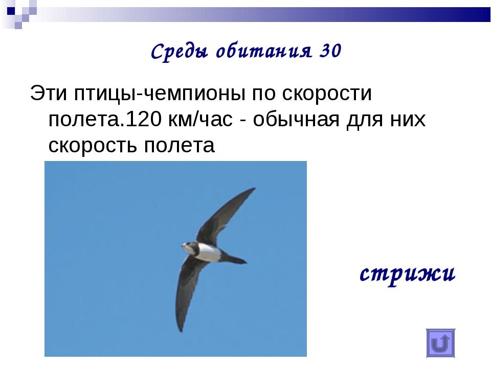 Среды обитания 30 Эти птицы-чемпионы по скорости полета.120 км/час - обычная...