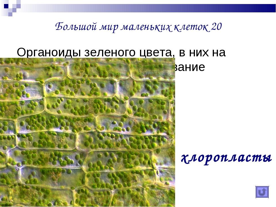 Большой мир маленьких клеток 20 Органоиды зеленого цвета, в них на свету прои...