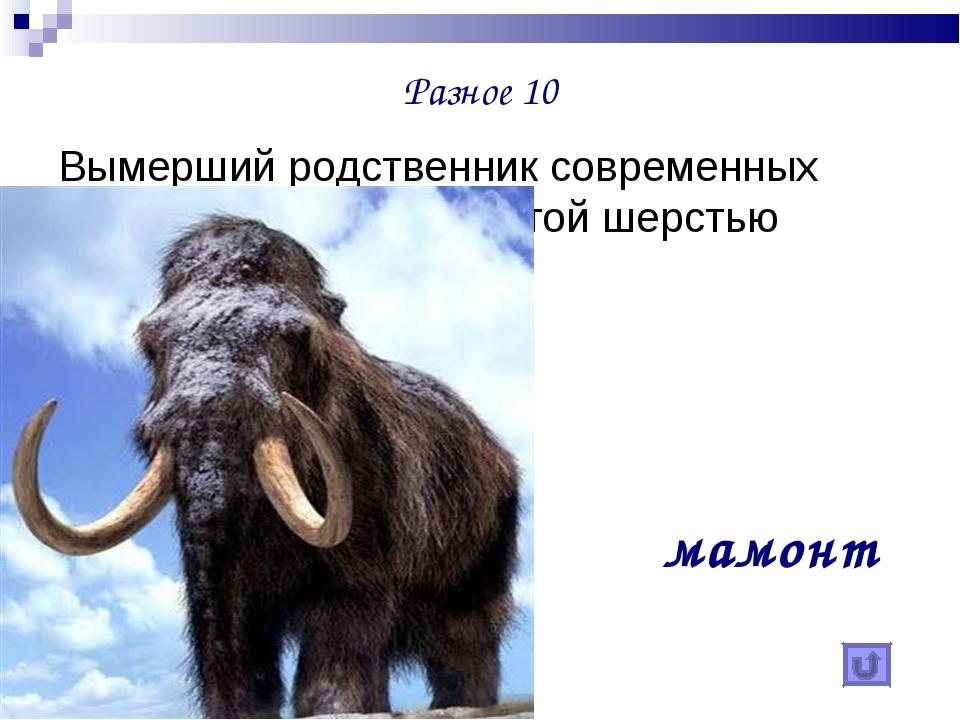 Разное 10 Вымерший родственник современных слонов, покрытый густой шерстью ма...