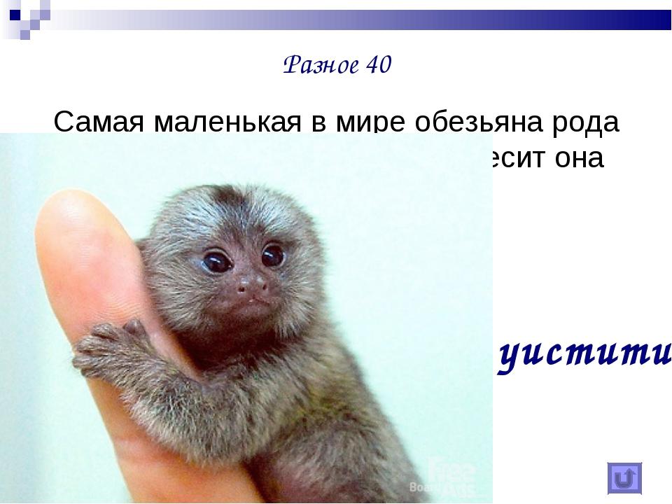 Разное 40 Самая маленькая в мире обезьяна рода игрунок, ее длина 32 см, а вес...