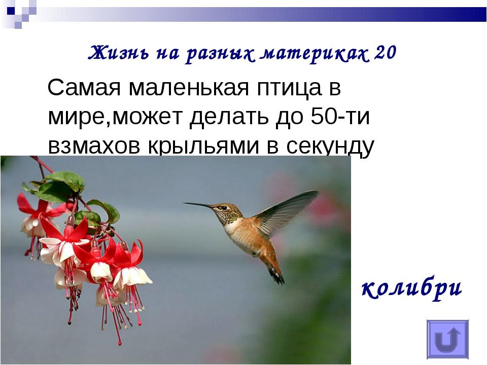 Жизнь на разных материках 20 Самая маленькая птица в мире,может делать до 50-...