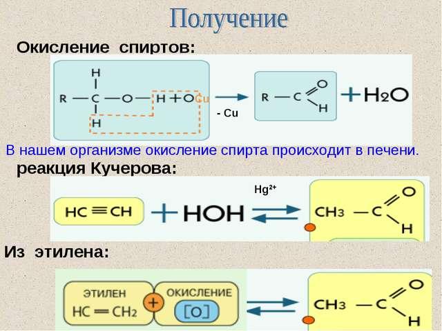 реакция Кучерова: Окисление спиртов: Из этилена: В нашем организме окисление...