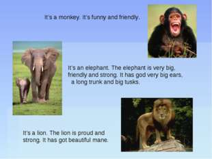 It's a monkey. It's funny and friendly. It's a lion. The lion is proud and st