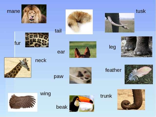 mane tail tusk ear fur neck paw leg feather wing beak trunk