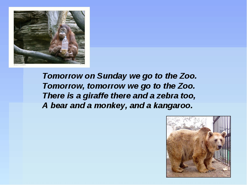 Tomorrow on Sunday we go to the Zoo. Tomorrow, tomorrow we go to the Zoo. The...