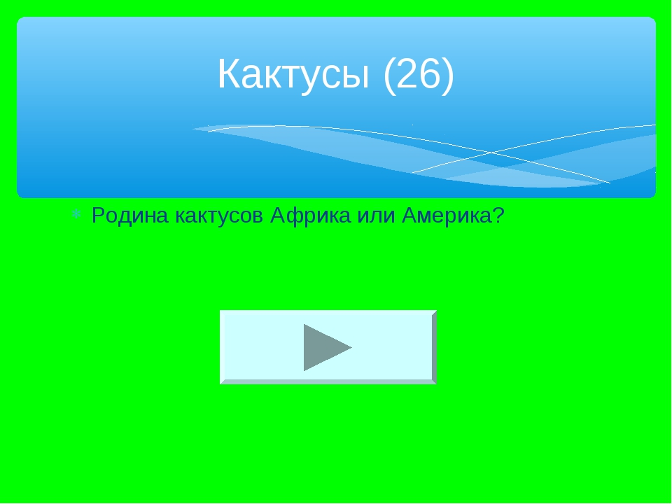 Родина кактусов Африка или Америка? Кактусы (26)