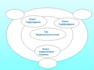 Тип Кишечнополостные Класс Сцифоидные Класс Гидроидные Класс Коралловые полипы