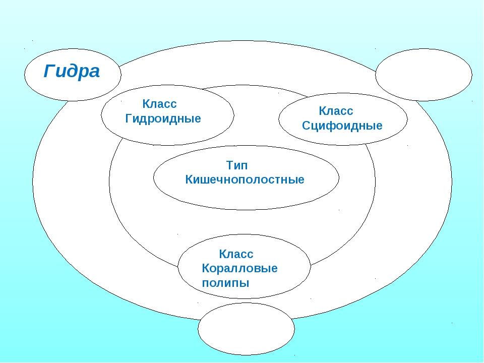 Тип Кишечнополостные Класс Сцифоидные Класс Гидроидные Класс Коралловые поли...