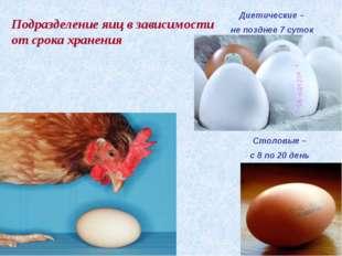 Столовые – с 8 по 20 день Диетические – не позднее 7 суток Подразделение яиц