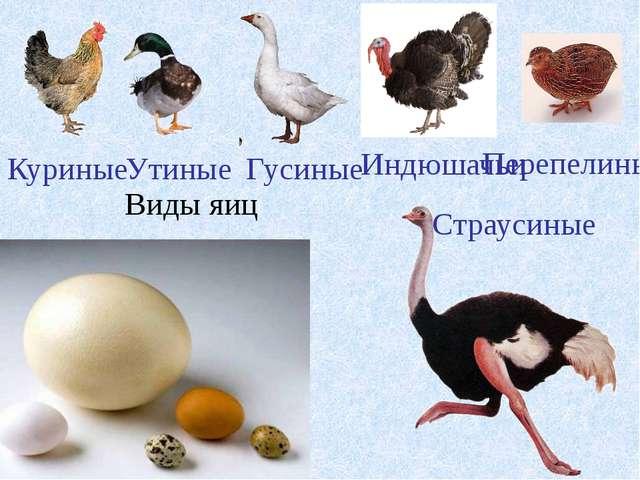 Виды яиц Гусиные Утиные Индюшачьи Куриные Страусиные Перепелиные