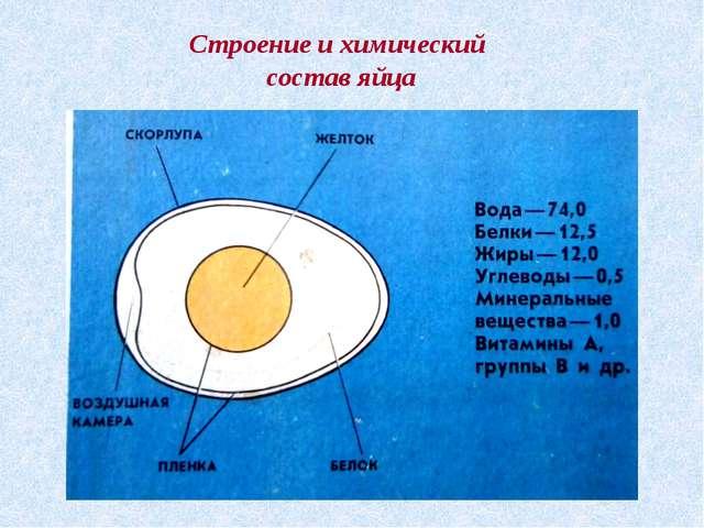 Строение и химический состав яйца Строение и химический состав яйца
