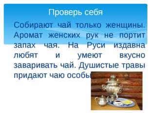 Собирают чай только женщины. Аромат женских рук не портит запах чая. На Руси