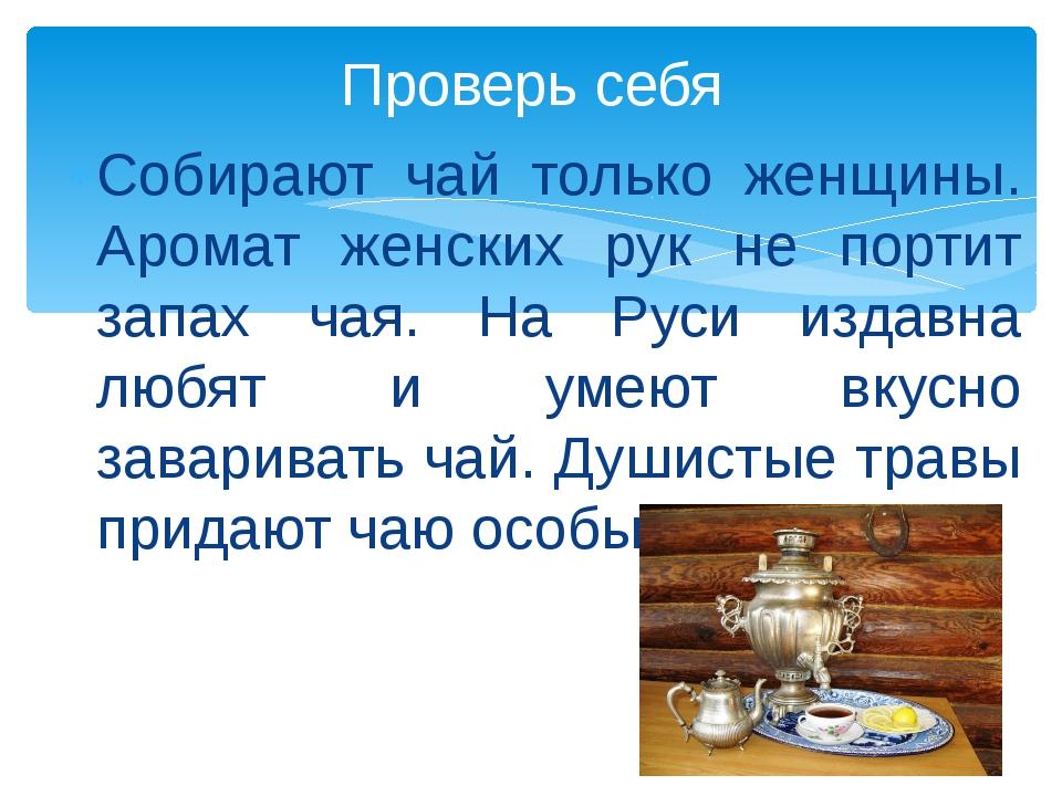 Собирают чай только женщины. Аромат женских рук не портит запах чая. На Руси...