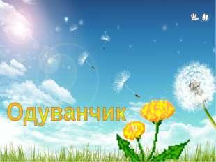 На лужайке, где кусты, Ярко-жёлтые цветы С солнышком проснулись, Сладко потян