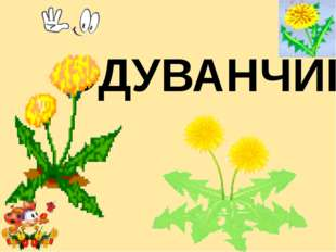 ОДУВАНЧИК Лукяненко Элеонора Анатольевна, учитель начальных классо МКОУ СОШ №