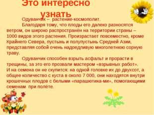 Это интересно узнать Одуванчик – растение-космополит. Благодаря тому, что п