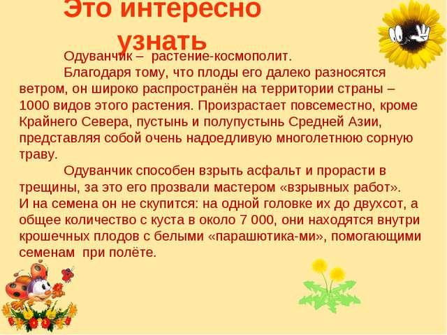 Это интересно узнать Одуванчик – растение-космополит. Благодаря тому, что п...