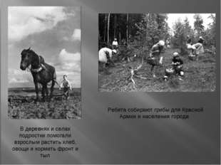 Ребята собирают грибы для Красной Армии и населения города В деревнях и села