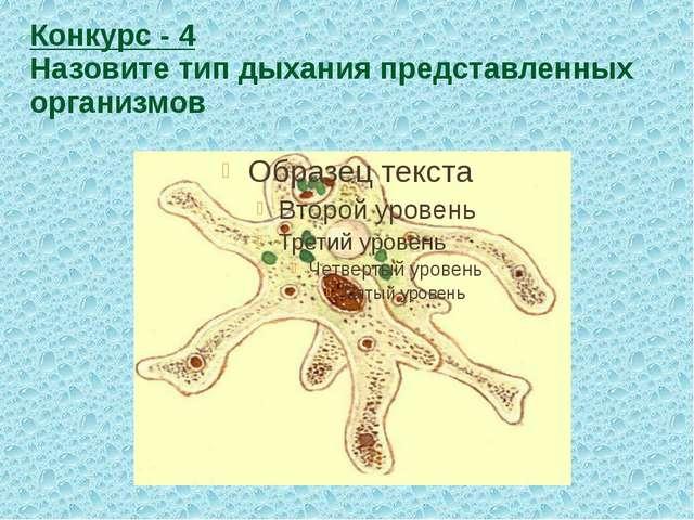 Конкурс - 4 Назовите тип дыхания представленных организмов