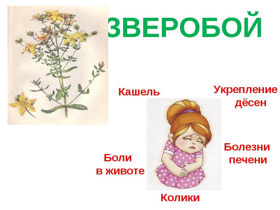ЗВЕРОБОЙ Кашель Укрепление дёсен Колики Болезни печени Боли в животе