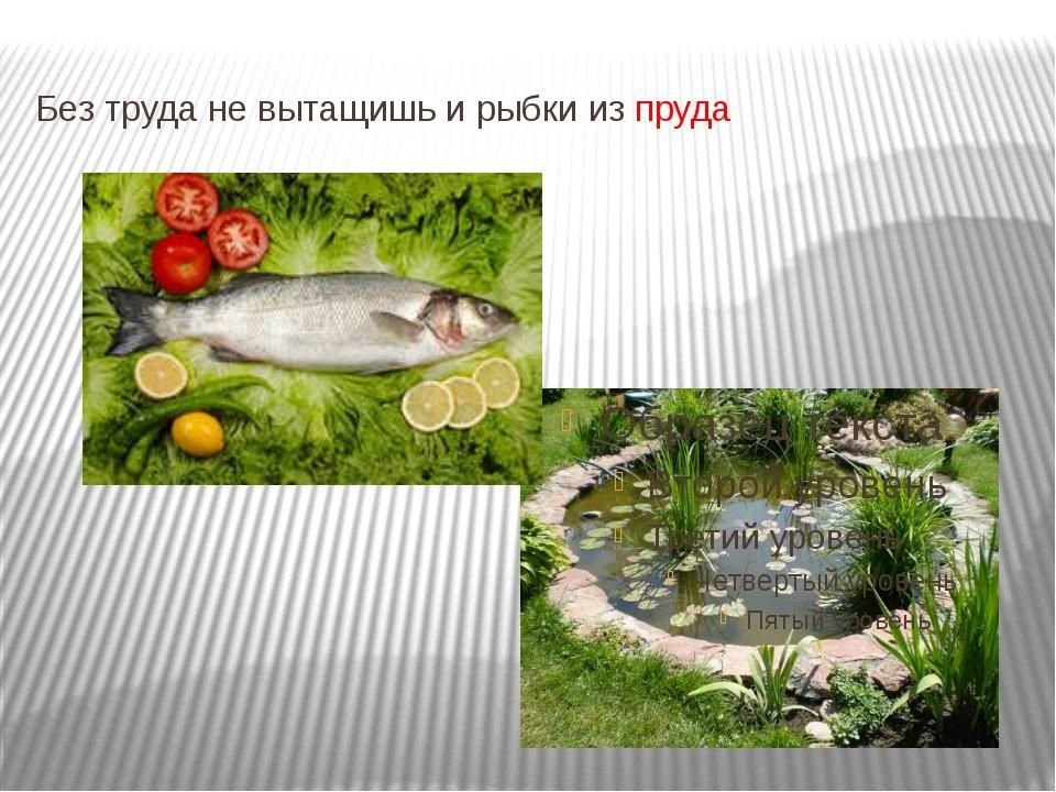 Без труда не вытащишь и рыбки из пруда