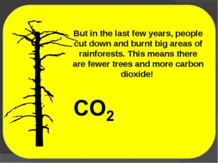 But in the last few years, people cut down and burnt big areas of rainforests