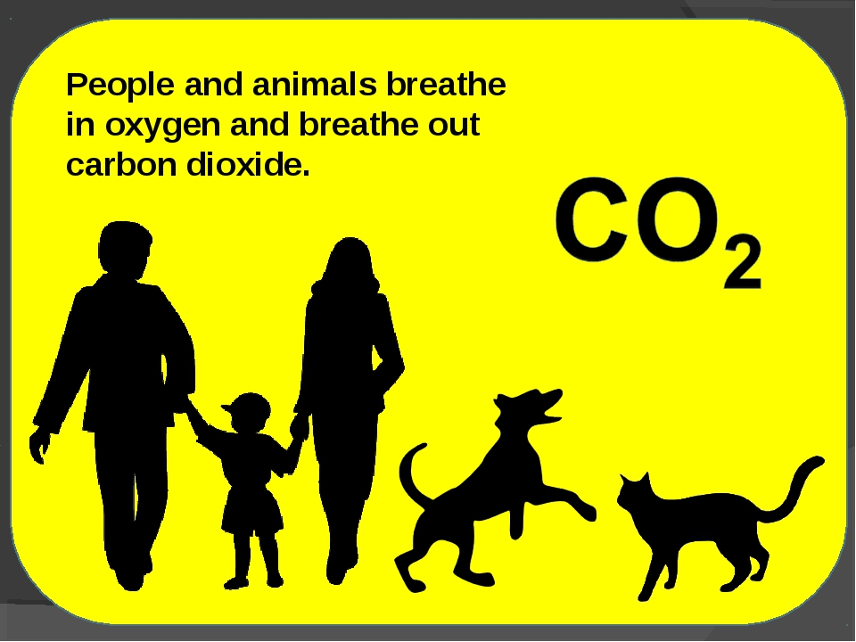 People and animals breathe in oxygen and breathe out carbon dioxide.