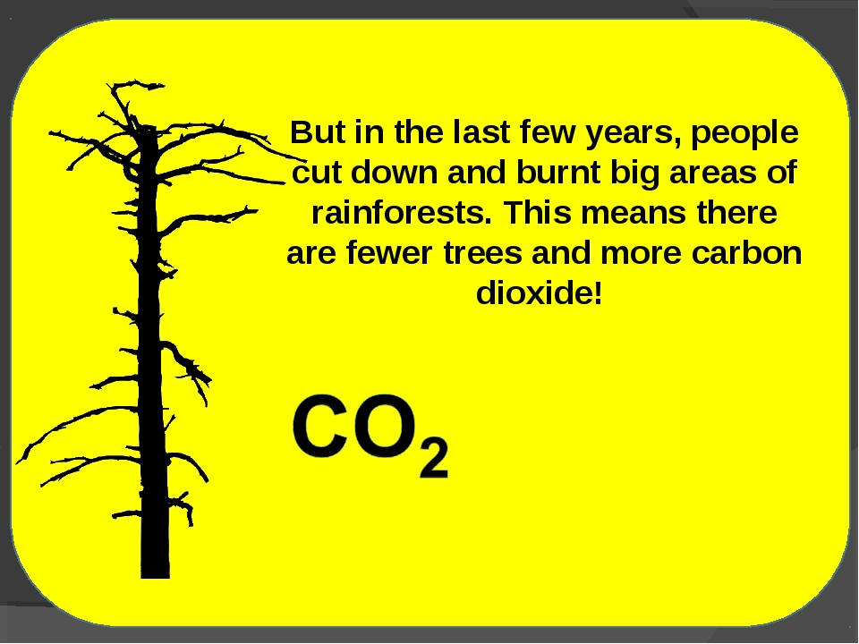 But in the last few years, people cut down and burnt big areas of rainforests...