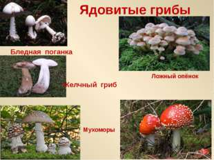Ядовитые грибы Бледная поганка Ложный опёнок Мухоморы Желчный гриб