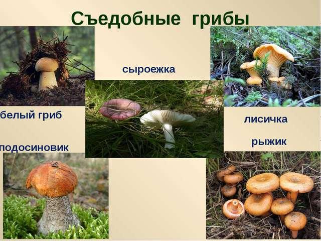 Съедобные грибы белый гриб лисичка подосиновик рыжик сыроежка