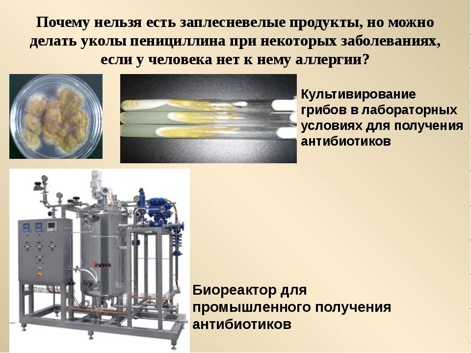 Почему нельзя есть заплесневелые продукты, но можно делать уколы пенициллина...