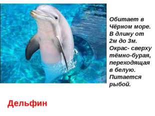 Дельфин Обитает в Чёрном море. В длину от 2м до 3м. Окрас- сверху тёмно-бурая