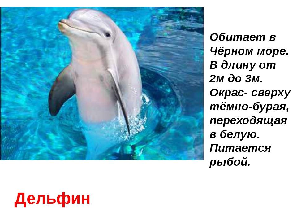 Дельфин Обитает в Чёрном море. В длину от 2м до 3м. Окрас- сверху тёмно-бурая...