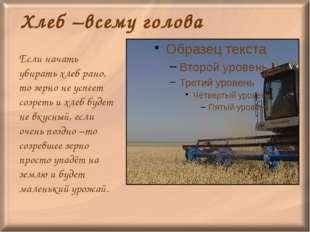Хлеб –всему голова Если начать убирать хлеб рано, то зерно не успеет созреть