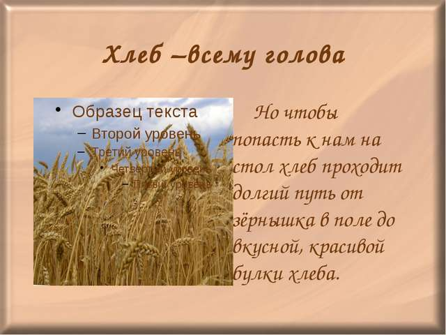 Хлеб –всему голова Но чтобы попасть к нам на стол хлеб проходит долгий путь...