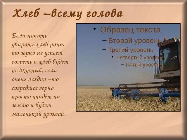 Хлеб –всему голова Если начать убирать хлеб рано, то зерно не успеет созреть...