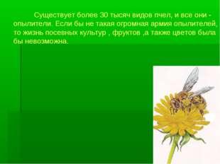 Существует более 30 тысяч видов пчел, и все они - опылители. Если бы не така