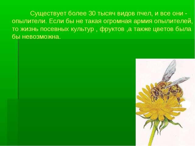 Существует более 30 тысяч видов пчел, и все они - опылители. Если бы не така...