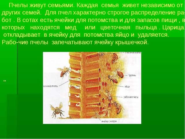 Пчелы живут семьями. Каждая семья живет независимо от других семей. Для пчел...
