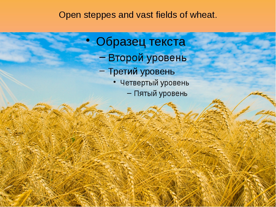 Open steppes and vast fields of wheat.
