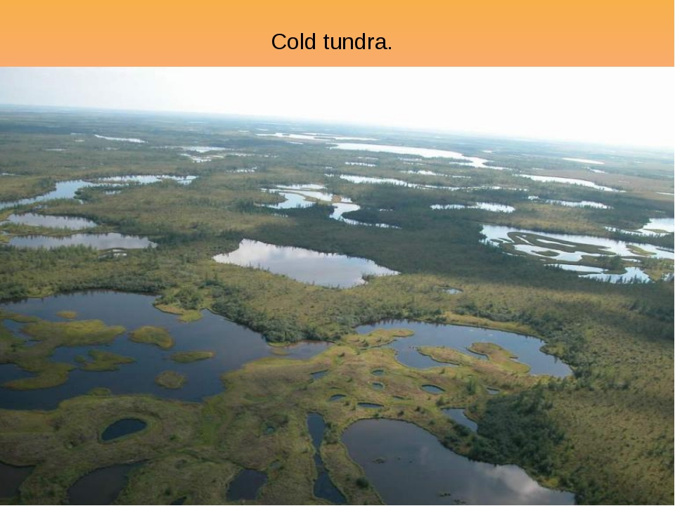 Cold tundra.
