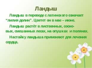 """Ландыш Ландыш в переводе с латинского означает """"лилия долин"""". Цветет он в мае"""
