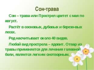 Сон-трава Сон – трава или Прострел цветет с мая по август. Растёт в сосновых
