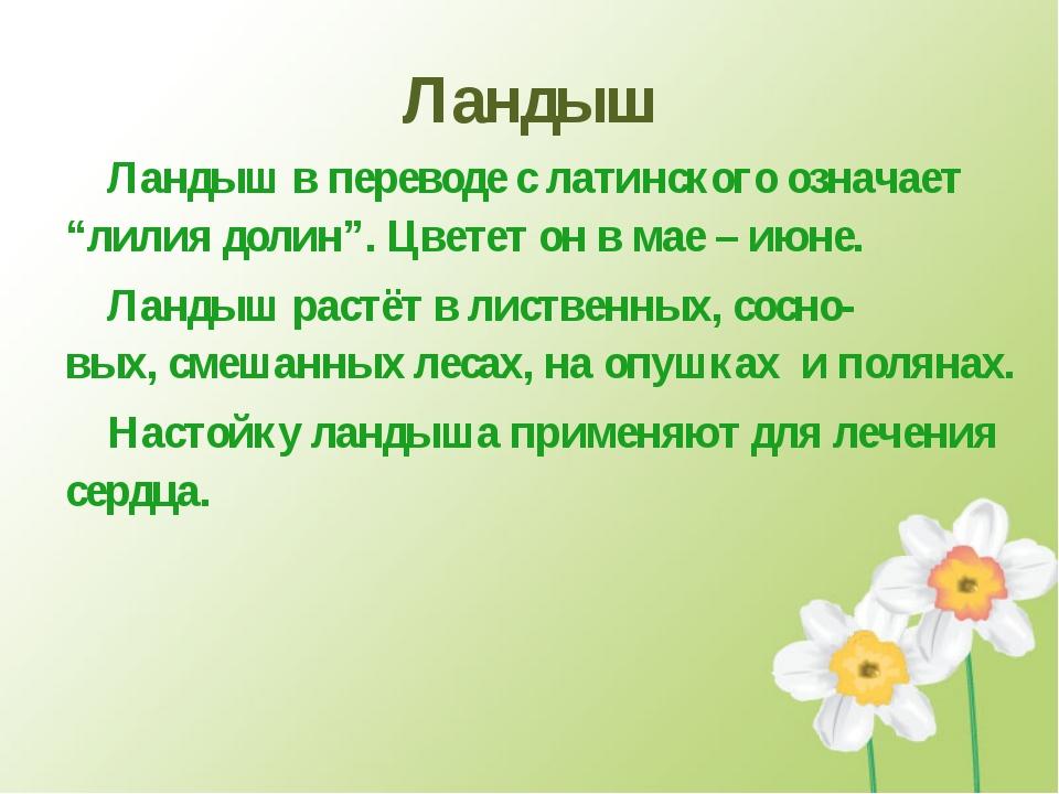 """Ландыш Ландыш в переводе с латинского означает """"лилия долин"""". Цветет он в мае..."""
