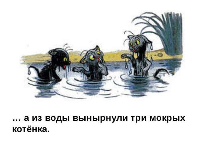 … а из воды вынырнули три мокрых котёнка.